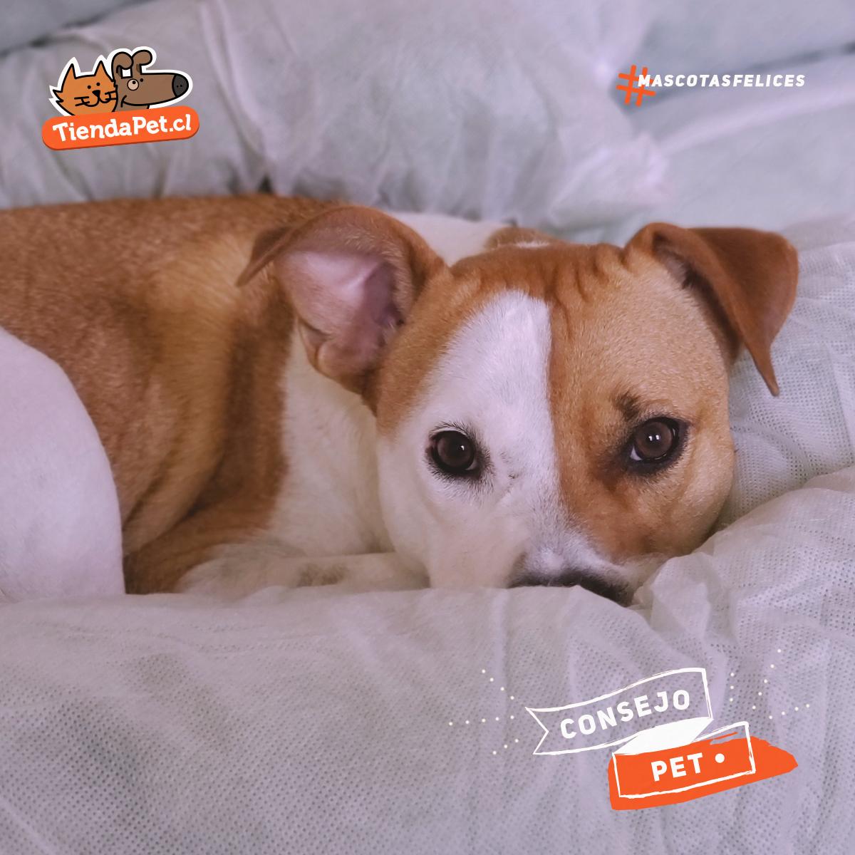 Resfriado en mascotas: síntomas y cuidados
