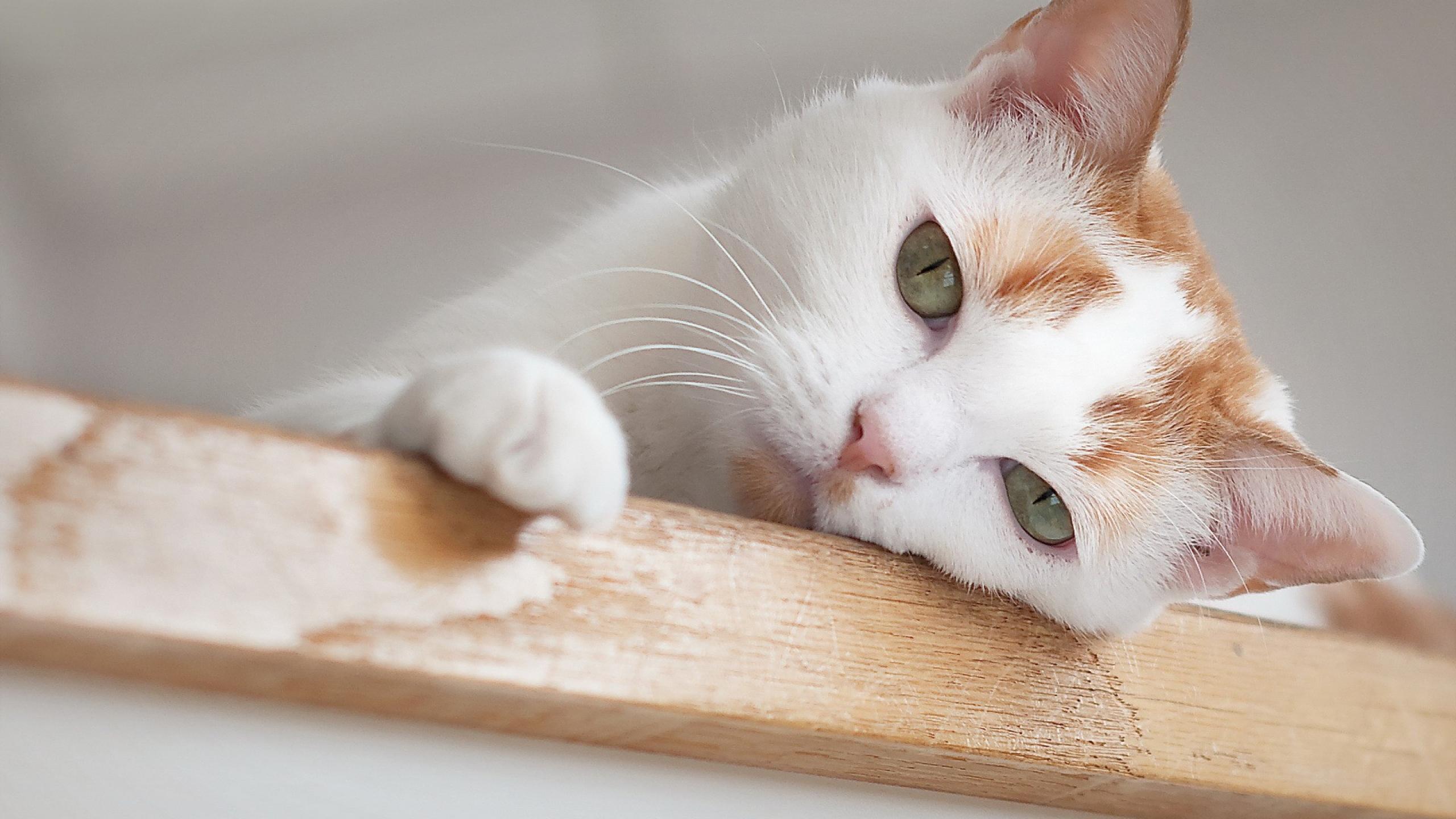 ¿Tienes un gato que se aburre?