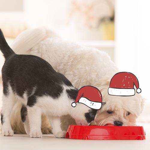 Cena de fin de año y los cuidados de nuestras mascotas