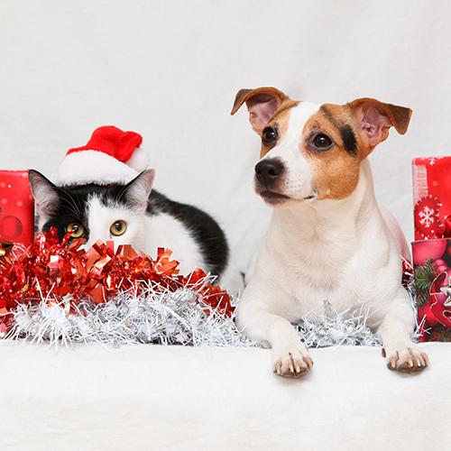 Cuidados Navideños: Decoración segura para nuestras mascotas
